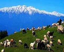 Travel Package Himachal
